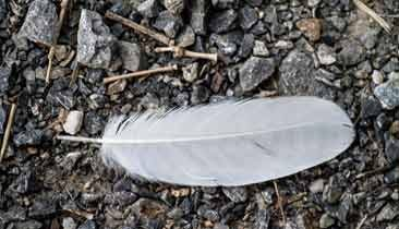 feather_366x210