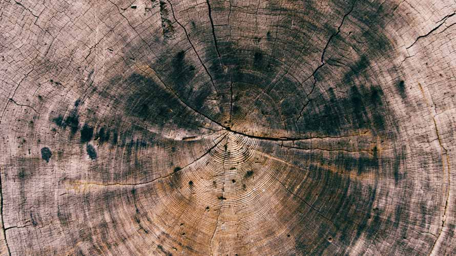 tree-time_890x500
